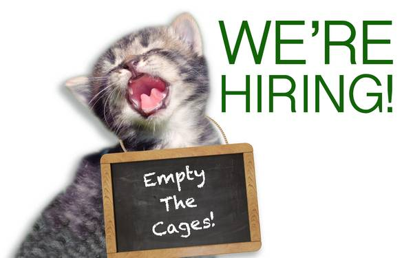 we u0026 39 re hiring animal and eco news interns  fellows  editorial assistants in new york  ny  united