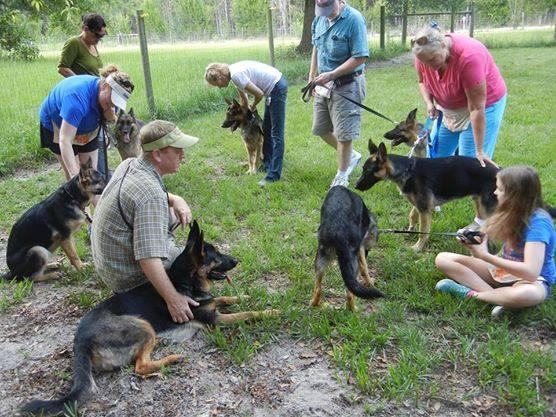 Internships With Service Dog Training