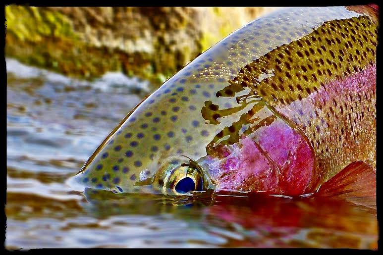 Hiring fly fishing guides denver co united states for Fly fishing jobs