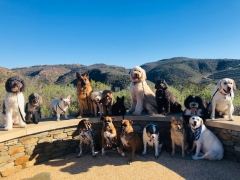 Orange County Pet Care