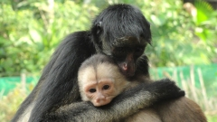 Wildlife Rescue Center Paseo de los Monos