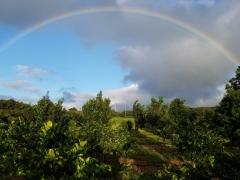 Lokoea Farms
