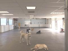 Rocwind Canine Center