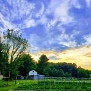 Weaver Acres Farm