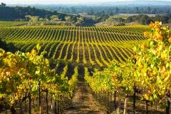 Windsor Oaks Vineyards and Winery