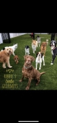 Robbye�s Gentle Groomers & RGG Doggie Daycare