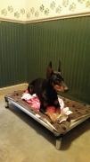 Shady Mountain Pet Retreat