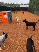 Unleashed Dog Daycare & Wellness Center