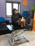 Dakotah's Doggy Daycare Hotel & Salon