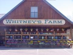 Whitney's Farm Market, LLC