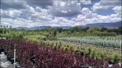 Verde River Growers